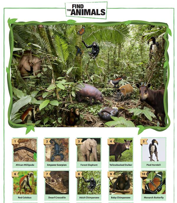 Chimpanzee Find the Animals Game
