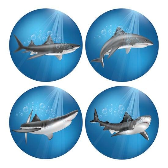 Shark Varieties