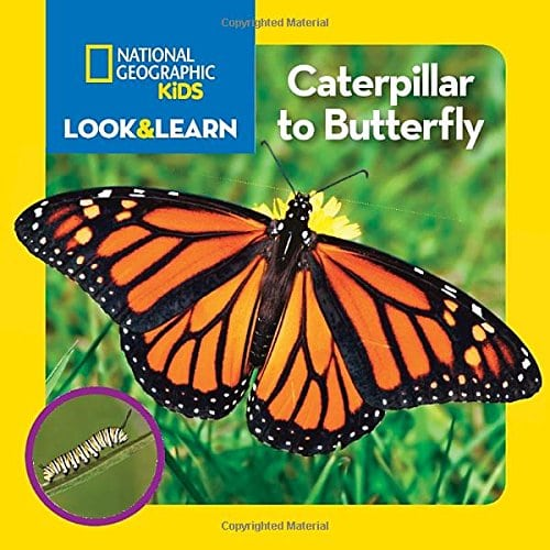 National Geographic Kids Look and Learn- Caterpillar to Butterfly