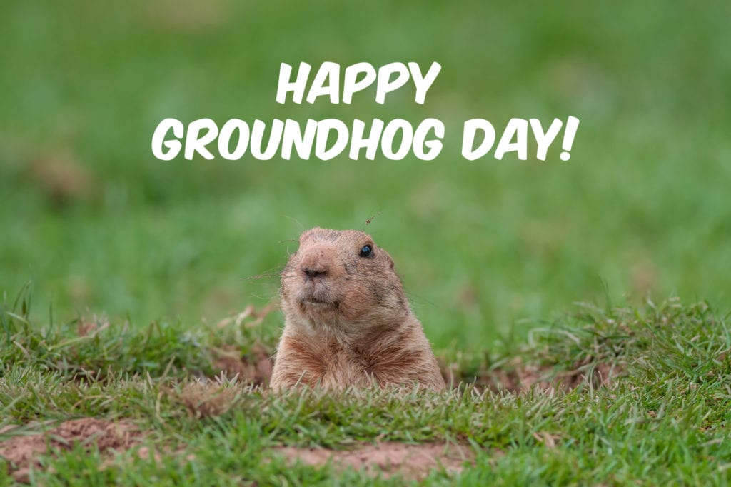 picture about Ground Hog Printable identified as No cost Printable Groundhog Working day Phrase Glance Puzzle - Jinxy Youngsters